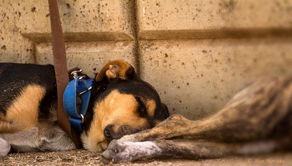 Tucson Homeless' Dog Friends
