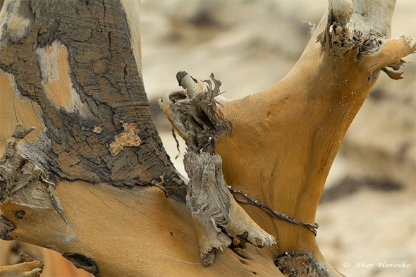 Driftwood Chesapeake bay